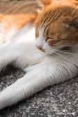 貓咪集:貓咪集 1090317-02
