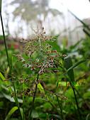 2011-02-18 春天的花兒:DSC08893.jpg