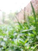 2011-02-18 春天的花兒:DSC08896.jpg