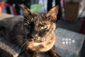 貓咪集:貓咪集 1081126-04