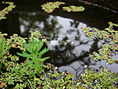 2011-02-18 春天的花兒:DSC08913.jpg