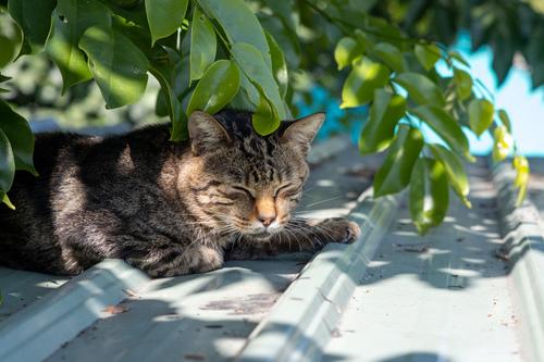 貓咪集 1100105-003 - 貓咪集