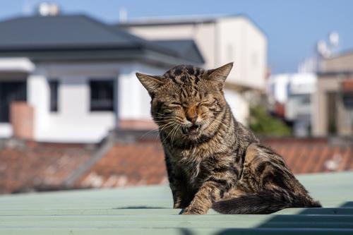 貓咪集 1100105-007 - 貓咪集