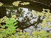 2011-02-18 春天的花兒:DSC08914.jpg