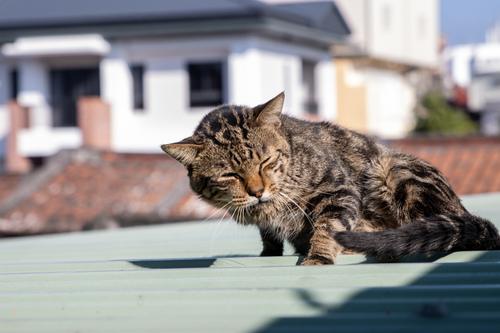 貓咪集 1100105-005 - 貓咪集