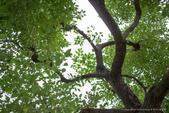 珊卓的生態觀察記錄(2018年):2018 ♥ 珊卓生態記記 0108-012