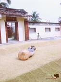 2011 鄉下好快活:DSC02222.jpg