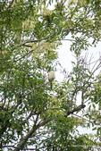 台灣鳥:台灣鳥 1091111-004
