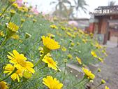 2011-02-18 春天的花兒:DSC08674.jpg