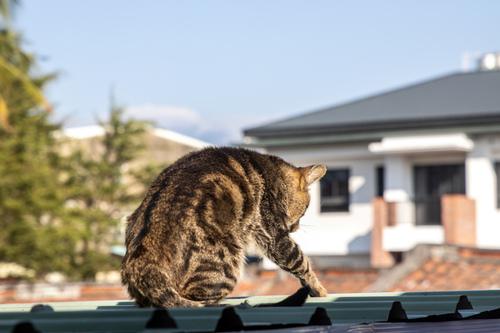 貓咪集 1100105-004 - 貓咪集