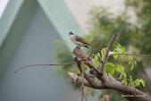 台灣鳥:台灣鳥 1091023-001