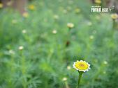 2011-02-18 春天的花兒:DSC08679.jpg