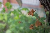 珊卓的生態觀察記錄(2018年):2018 ♥ 珊卓生態記記 0108-003