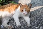 貓咪集:貓咪集 1090317-01