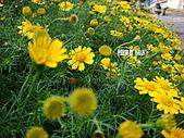 2011-02-18 春天的花兒:DSC08828.jpg