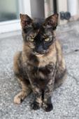 貓咪集:貓咪集1070702