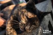 貓咪集:貓咪集 1081126-03
