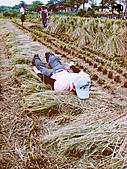 2011 鄉下好快活:DSC02536.jpg