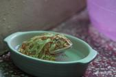 黃金角蛙~長大記:黃金角蛙~長大記 1090418-01