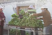 農村的食物會走動:1090131 農村的食物會走動05