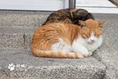貓咪集:貓咪集 1081231