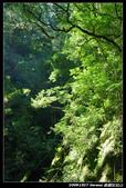 20091027 桃園-拉拉山:DSC_2636.jpg