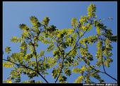 20091027 桃園-拉拉山:DSC_2652.jpg