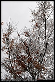 20081206 武陵.福壽山尋楓:DSC_8466.jpg
