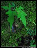 20091027 桃園-拉拉山:DSC_2664.jpg