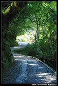20091027 桃園-拉拉山:DSC_2671.jpg