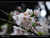 20080329-30 阿里山賞櫻:DSC_4285.jpg