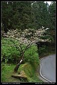 20080329-30 阿里山賞櫻:DSC_4294.jpg