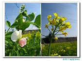 20100117 油菜花田:IMG_9406.JPG