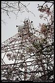 20080329-30 阿里山賞櫻:DSC_4334.jpg