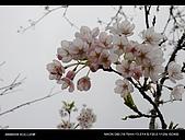 20080329-30 阿里山賞櫻:DSC_4335.jpg