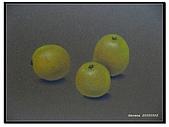 我的粉彩作品:20050502 三顆柳丁