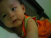 洋洋哥_0歲6~7個月:DSC00540.JPG