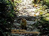 ◤阿淺的動物園:96.12.02 三義悅貓民宿之喵 1