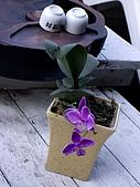 ◤草木&花園:淺娘的蘭花 3