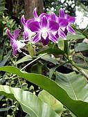 ◤草木&花園:泰國/暹邏公園 1