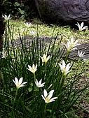 ◤草木&花園:泰國/暹邏公園 3