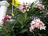 ◤草木&花園:泰國/Nusa Playa  5