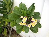◤草木&花園:泰國/Nusa Playa  6