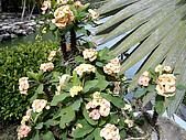◤草木&花園:泰國-九世皇廟 1