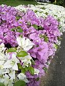 ◤草木&花園:泰國-九世皇廟 3