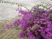◤草木&花園:泰國-九世皇廟 4