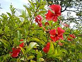 ◤草木&花園:泰國-七珍佛山 2