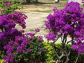 ◤草木&花園:泰國-七珍佛山 3