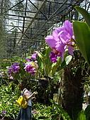 ◤草木&花園:泰國-東芭樂園 1