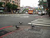 ◤阿淺的動物園:95.12.16五分埔之鴿鴿我最大3
